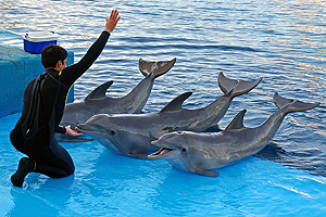 Careers In Animal Training Enrichment Fields